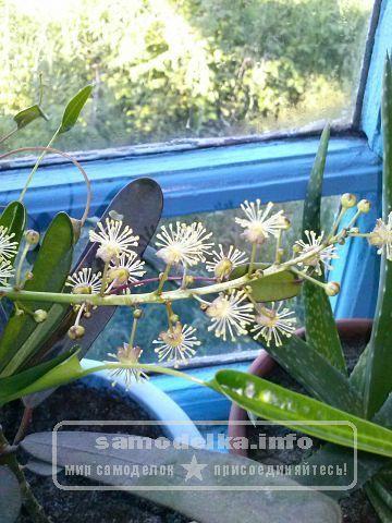 огород на окне