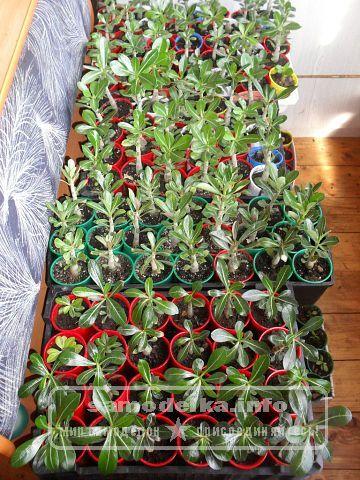 выращивание горшечных культур