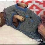 теплая одежда для собаки своими руками