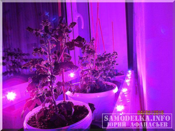 Самодельная светодиодная лампа для растений