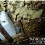 Самодельная автоматическая поилка для цыплят