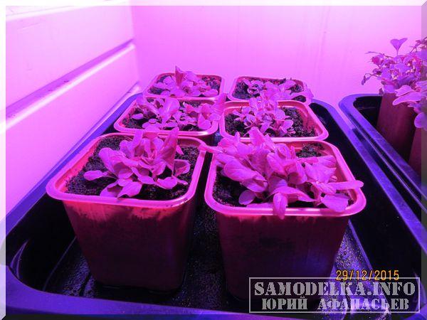 салат в самодельном гроубоксе