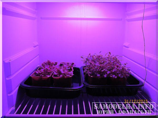 фото салатов выращенных в самодельном гроубоксе
